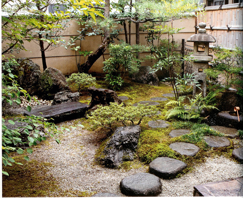 Small Aphonse Karr bamboo in Japanese style garden | landscape ...